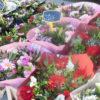 ベルギー、ゲントで日曜日のお散歩に - 毎週日曜日開催の花市場